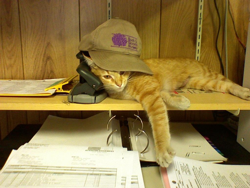 Bam-Bam the office cat